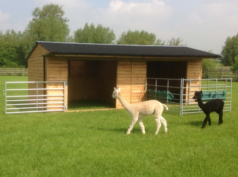 how to build an alpaca shelter