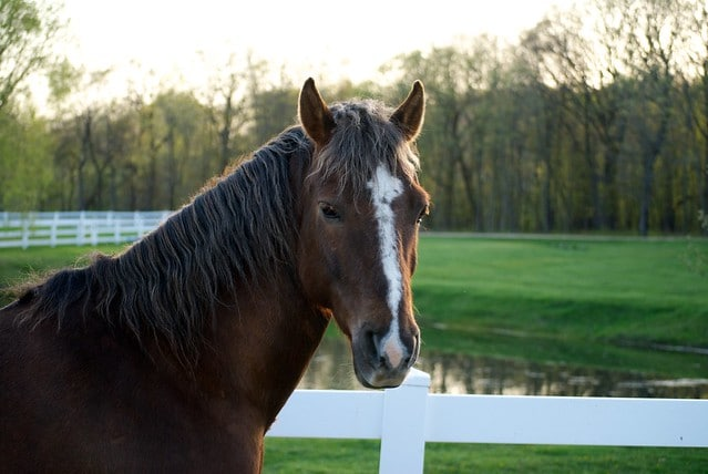 Physiotherapy for horses