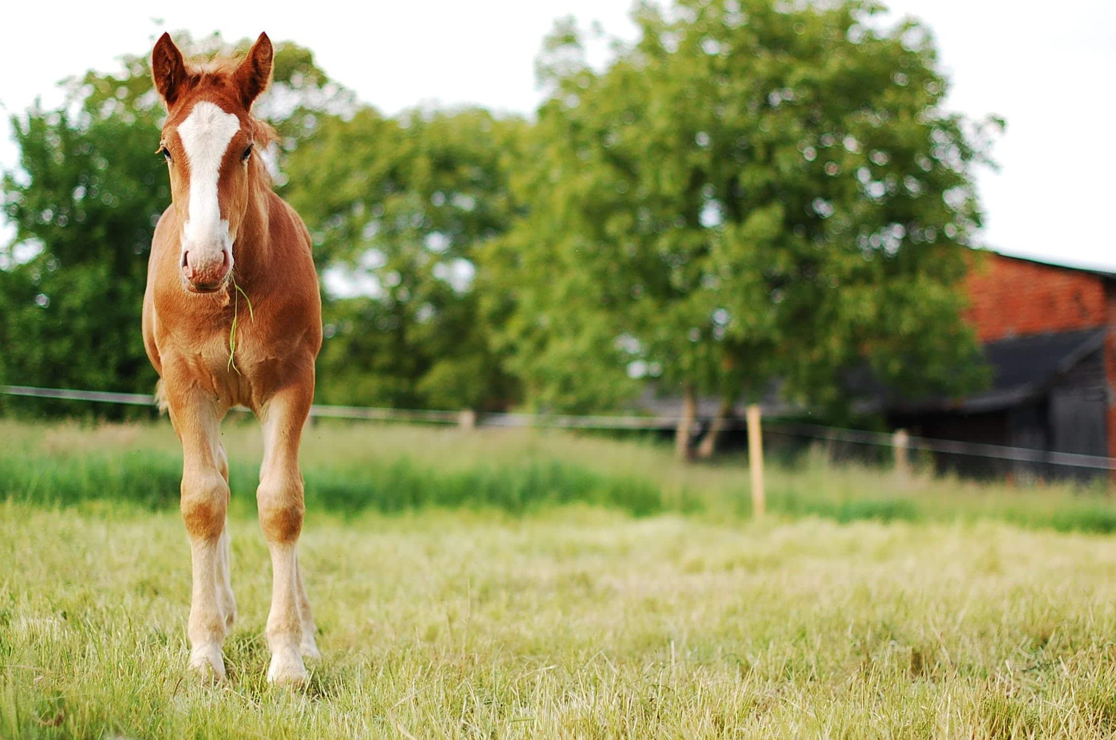 Pony standing in a field