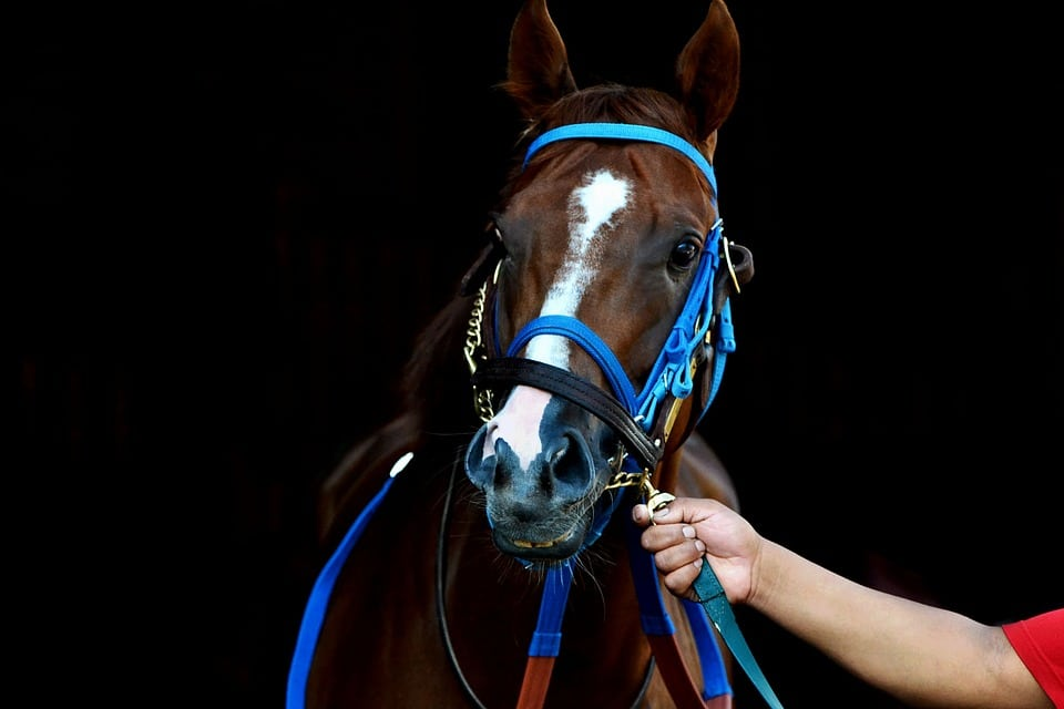 Racehorse as a foal