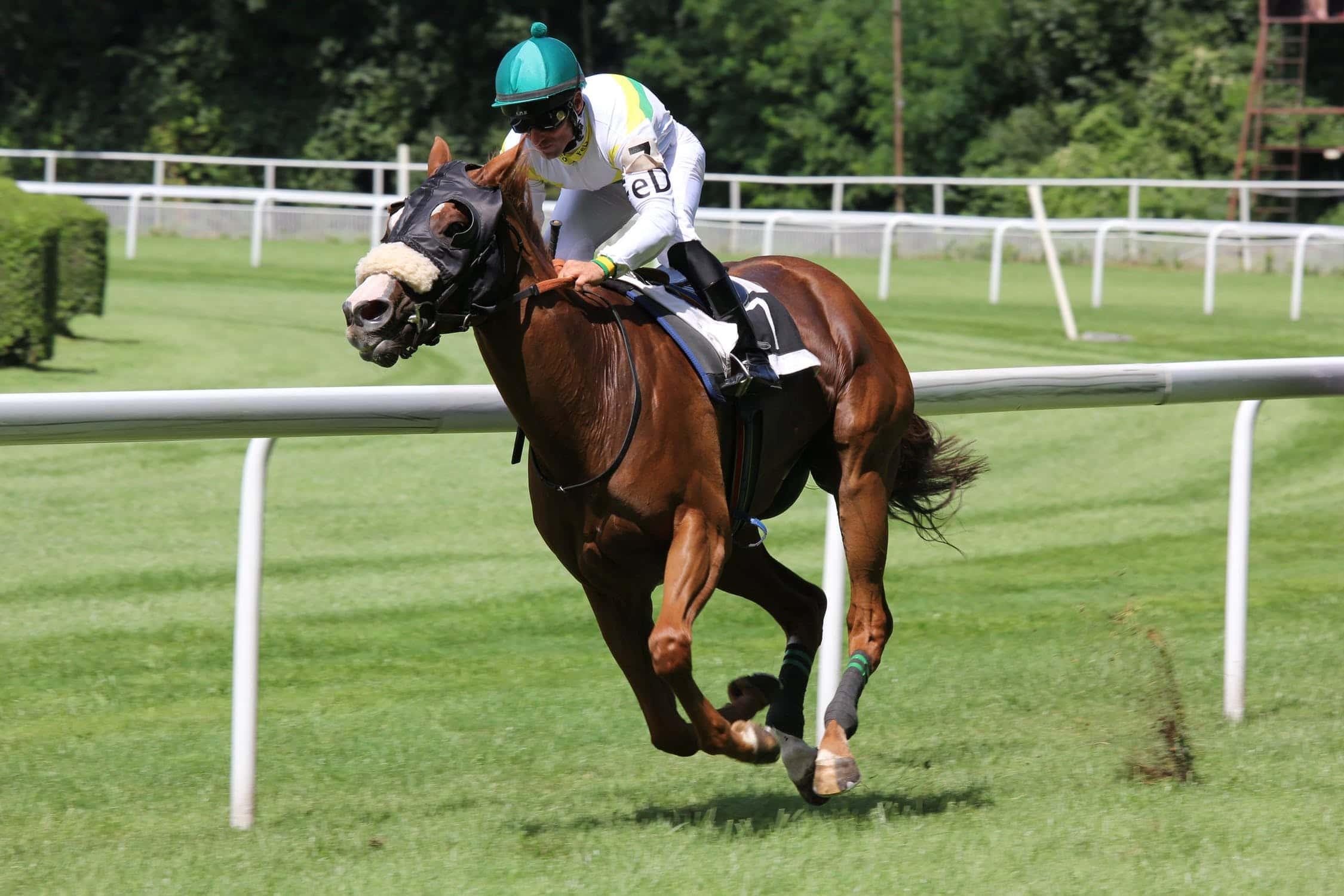 Rider racing a horse