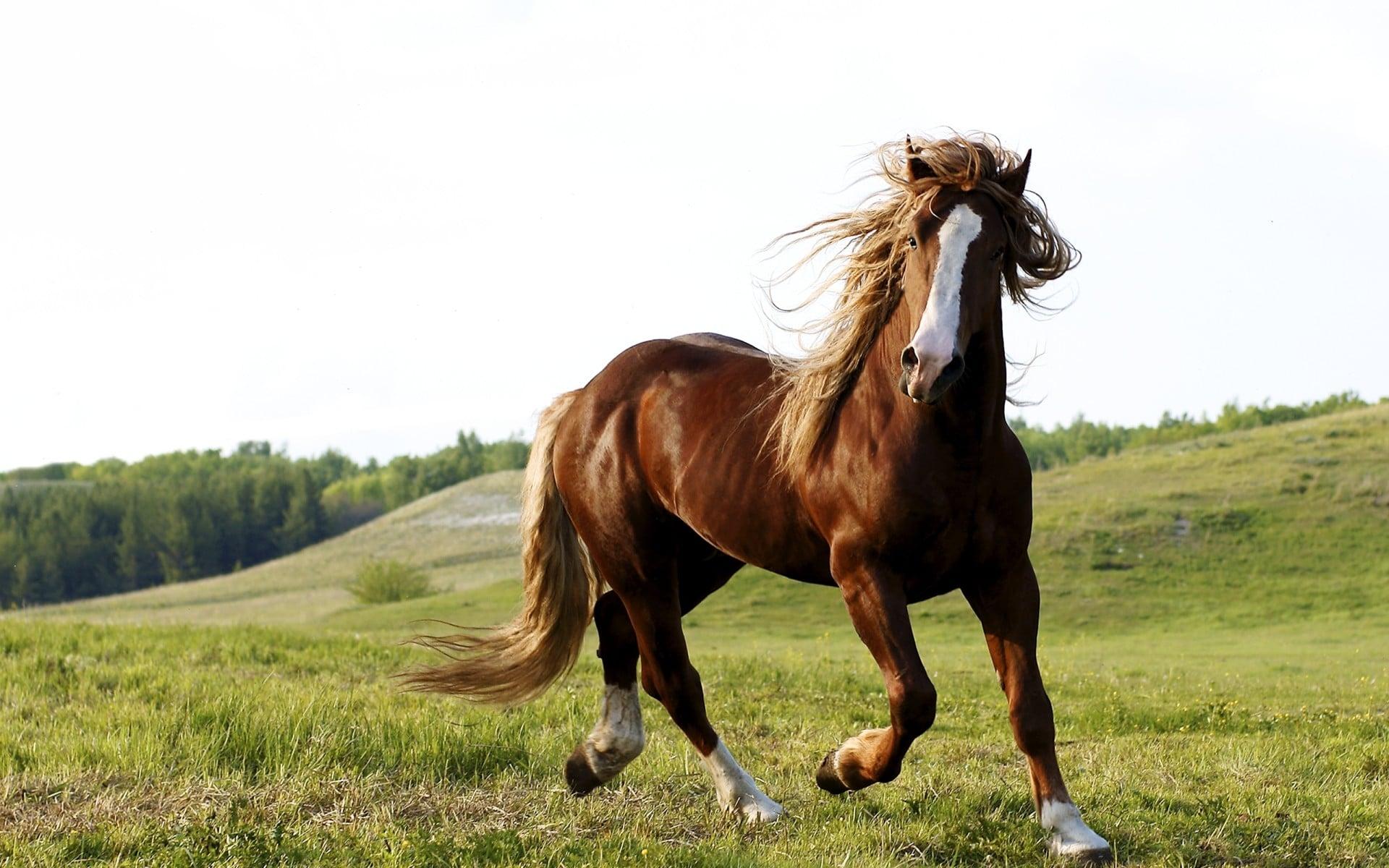 Runaway horse tracking