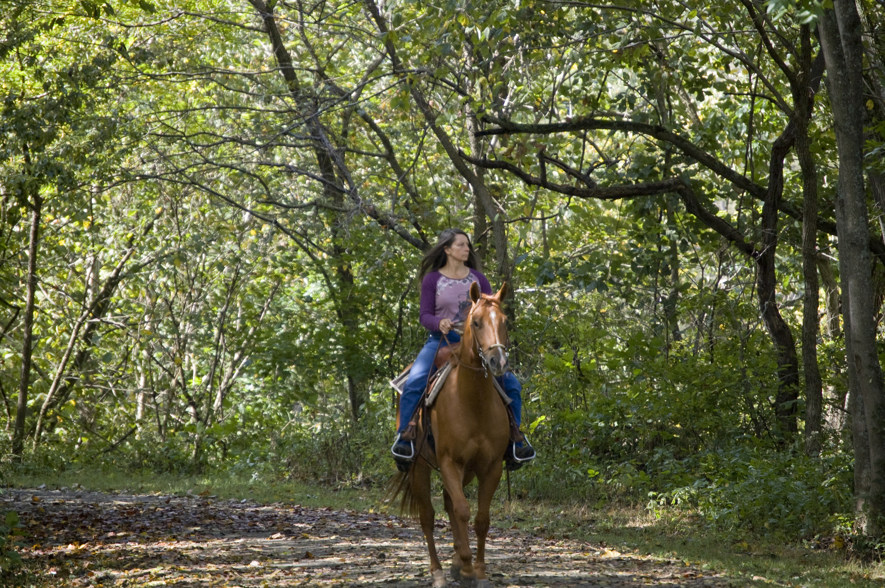 Students trail riding with their horses