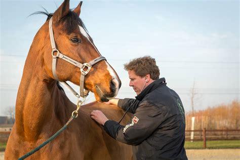 Vet checking horse health
