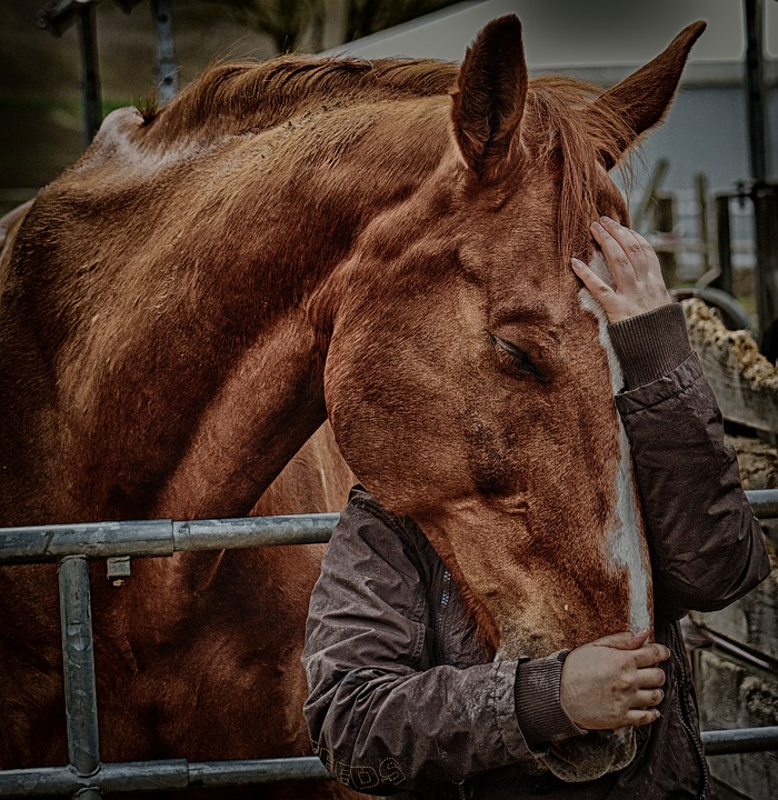 Woman hugging a horse for her mental health