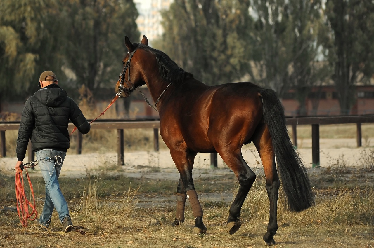 a horse owner training his brown horse for racing