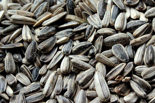 Can Horses Eat Black Oil Sunflower Seeds?